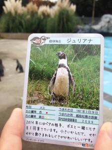 ペンギンのエサやりをするともらえるカード